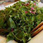 a foraged salad
